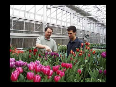 Why choose Cornell - Plant Sciences undergrad program at Cornell University