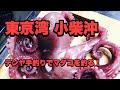 2019-3 東京湾 小柴沖 マダコ テンヤ 手釣り