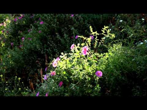 ISTANBUL TOUR  BURGAZ ISLAND 1-Canon 60D video