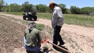 Tesuque Tribal Farms at Tesuque Pueblo