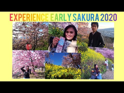 wonderful experience of early sakura at Matsuda-Japan