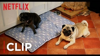 Lady Dynamite | Pugs Not Drugs | Netflix