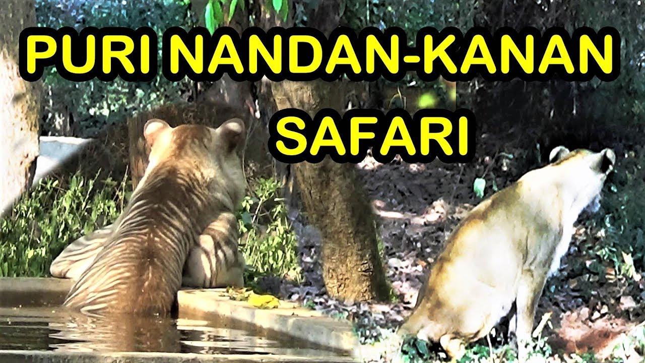 Puri Nandankanan Jungle Safari | Nandankanan Lion Tiger Safari | Puri Tour | Orissa Tourism
