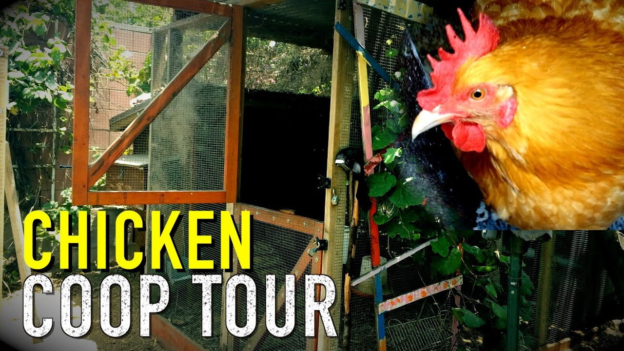 My Backyard Chicken Coop - Designs & Tour - My Backyard Chicken Coop - Designs & Tour - YouTube