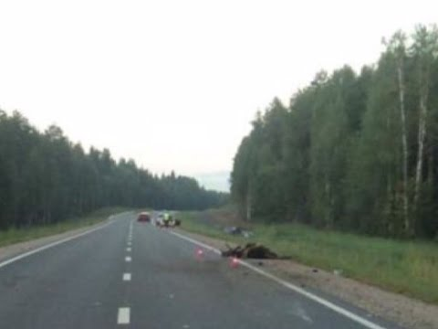В Верховажском районе в результате ДТП с лосем погиб житель Архангельской области
