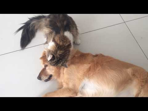 Very funny cat and dog!