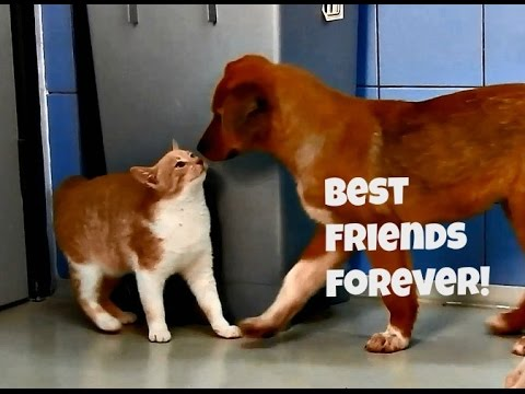 Rescue kittens and shelter puppies are best friends!