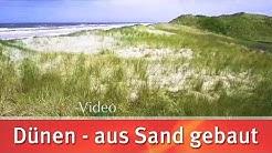Dünen - aus Sand gebaut // scinexx.de