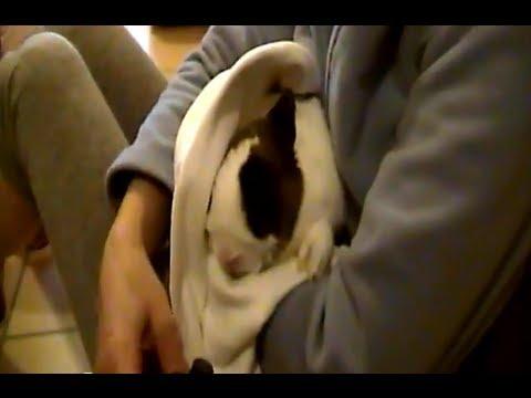 Filmati divertenti animali – Merlot coniglio nano e pazzo, cura bronchite con aerosol (video)