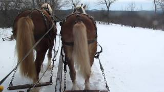 Horse Drawn Sleigh Ride In Maine