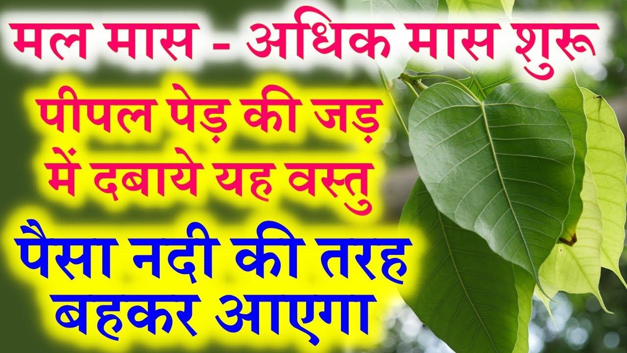 अधिक मास/पुरुषोत्तम मास/मलमास में पीपल पेड़ जड़ में करे ये उपाय आएगी घर परिवार में लखुशहाली Adhik Maas