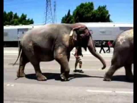 Ringling Bros.Circus Elephants & Wild Animals- Honda Center Anaheim Federal Cruelty Entertainment
