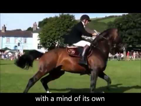 Horse riding is 'not' a sport