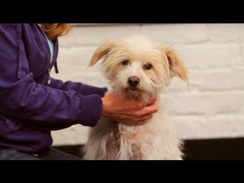 How to Teach Dog to Fetch & Retrieve | Dog Training