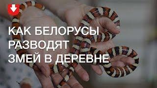 100 змей в деревенском доме: белорусы разводят на селе экзотических животных