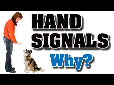 Dog Training Hand Signals   Why I need to use them?