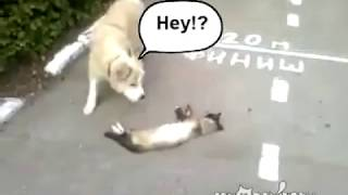 Funny dog Videos | Dog though the Cat was Dead