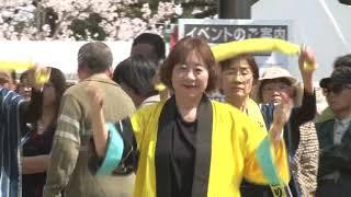 桜満開の松坂城跡で宣長まつりが行われました。踊りイベントでは松阪鈴...