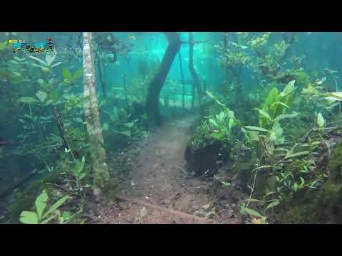 Trilha Submersa no Recanto Ecológico Rio da Prata video screenshot