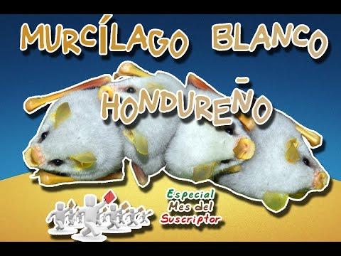 Honduran white bat | Camper Jungle | (Animal World) | Subscriber Month |