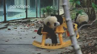 Pandas playing with horse rocking chairs