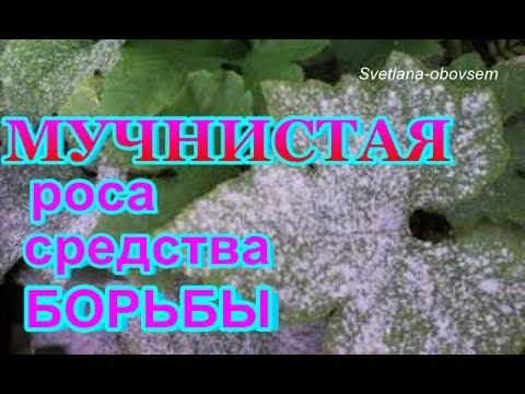 БОРЕМСЯ С МУЧНИСТОЙ РОСОЙ -СУПЕР ЭФФЕКТИВНЫЕ СРЕДСТВА...