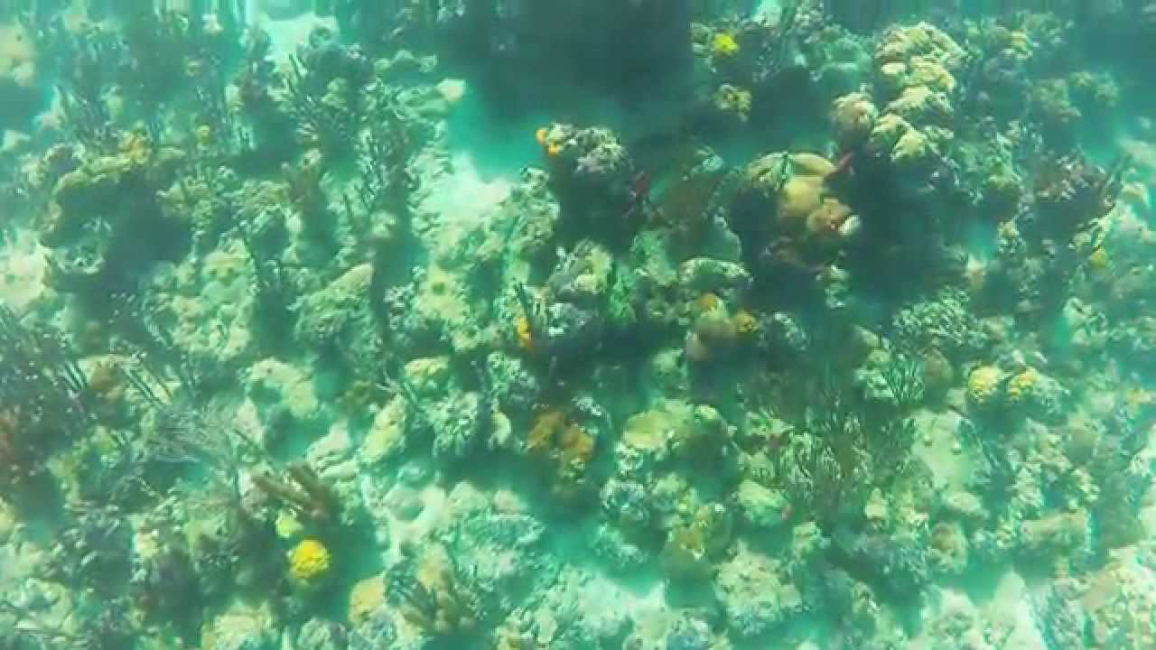 Coral Gardens Providencialis Turks And Caicos September 2015 Youtube