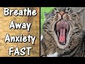 Best Breathing Exercise For Anxiety | DISCOVER How to Breathe Through Anxiety