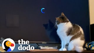 This Cat's Obsessed With One Movie | The Dodo Cat Crazy