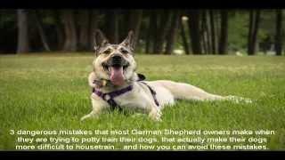 Potty Training German Shepherd Style