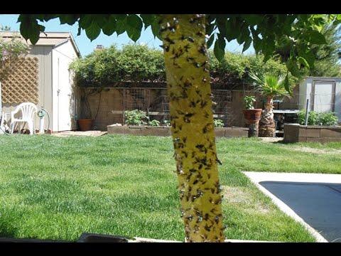 Recetas caseras para eliminar a las moscas doovi - Eliminar moscas en casa ...