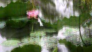 Frankie K. H. Ng 吳其鴻Show潔蓮花語 All Lotus