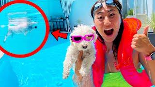 Teaching my Puppy How to Swim!