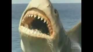 Lo Squalo 4 - La vendetta - Jaws The revenge (1987) Finale Eliminato dalla Produzione