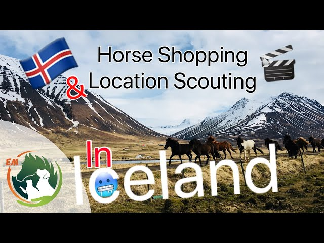 Horse Shopping & Location Scouting in ICELAND