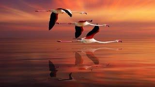 Природоведение. Птицы