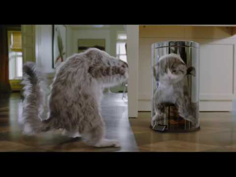 Virei Um Gato: Trailer Oficial Dublado