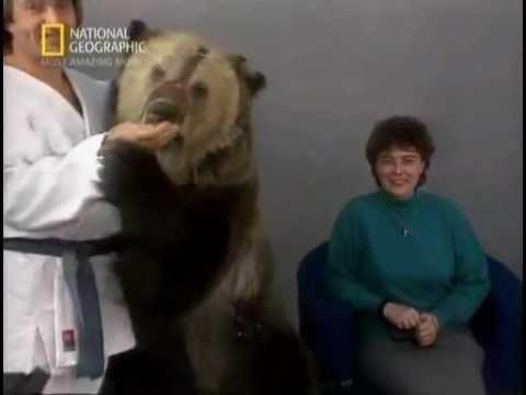 Медведь растерзал телеведущих!