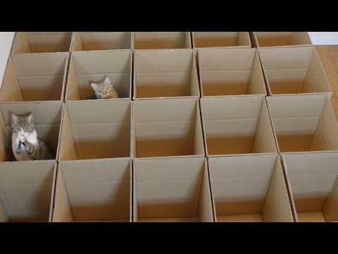 9 gatti in un labirinto di scatole, il video fa impazzire il web