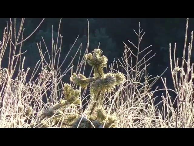 Изображение предпросмотра прочтения – «ЛИК» читают произведение «Весна (Зима не даром злится…)» Ф.И.Тютчева