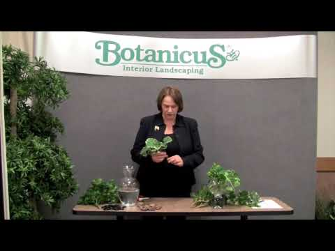 Prune this: How to root indoor tropical plants in water