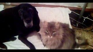 Вот такая Любовь! Мои кот и собака