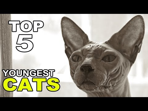 Top 5 Youngest Cat Breeds On Earth