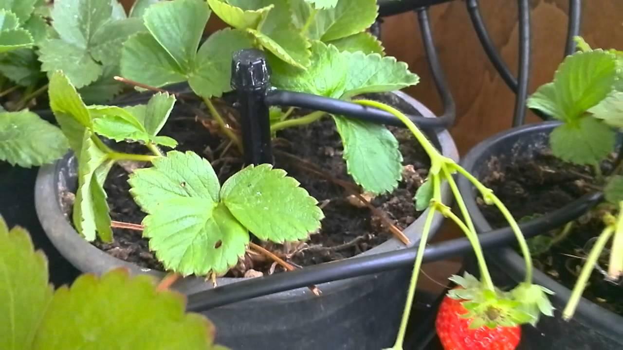 Impianto di irrigazione automatico fai da te youtube for Impianto irrigazione automatico
