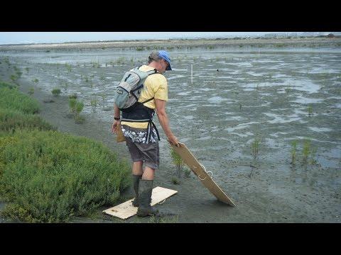 Wetlands Restoration Helps You!