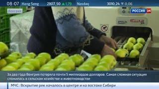 Антироссийские санкции ударили по венгерским фермерам(Венгерские власти создают специальный департамент для помощи бизнесменам, пострадавших от антироссийских..., 2016-04-21T07:51:33.000Z)