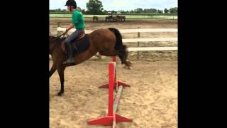 Miss Twist horse for sale