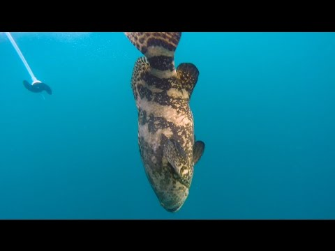Florida's Space Coast Fishing Offshore For Goliath Grouper