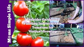 Mittleider Gardening: Planting Indeterminate Tomatoes for Vertical Growing