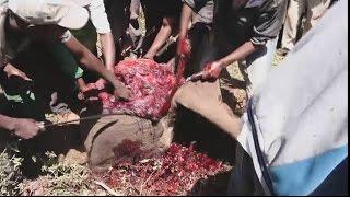 Residents feast on elephant meat in Meru County